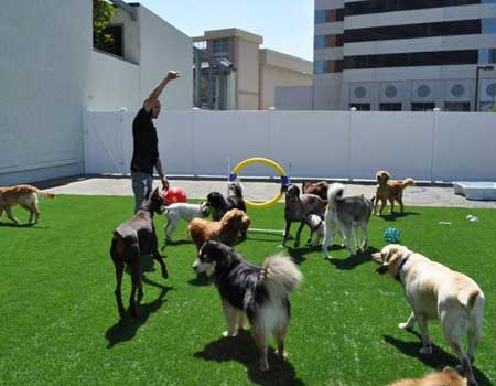 pet day care and supplies in los angeles california